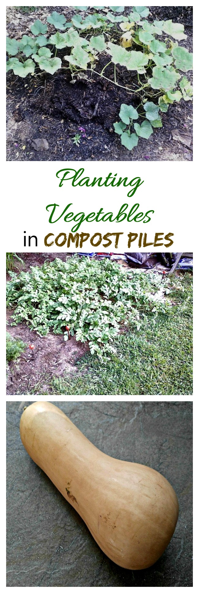 For really large vegetables that don't need fertilizing, try planting in compost piles. I experimented with this last year with great results.
