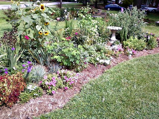 Front garden bed with bird bath