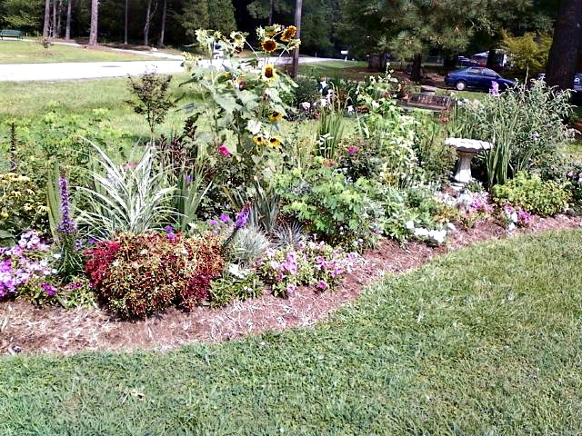 Front Garden Bed with coleus, sunflowers and annuals