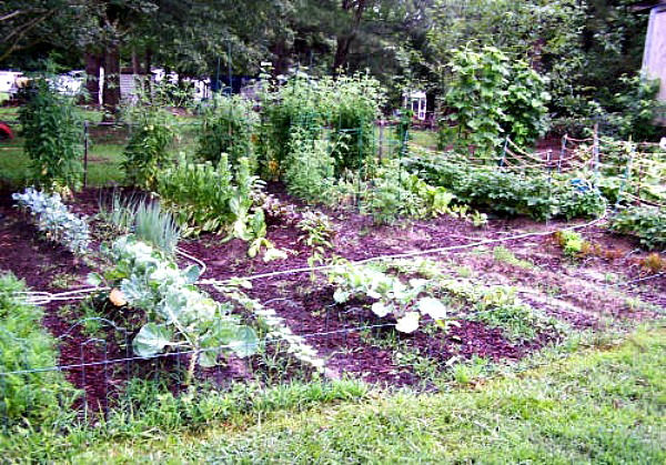 From the Gardening Cook - A Large vegetable garden bed.