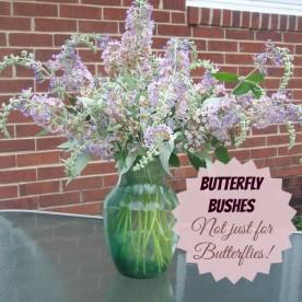 Butterfly Bushes make Wonderful cut flowers.