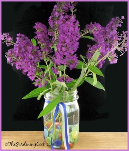 Purple butterfly bush cut flowers