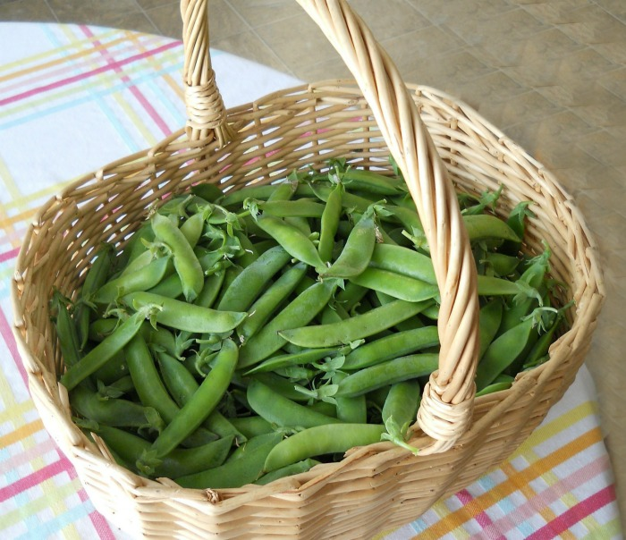 Growing Garden Peas: Tips For Growing Garden Peas