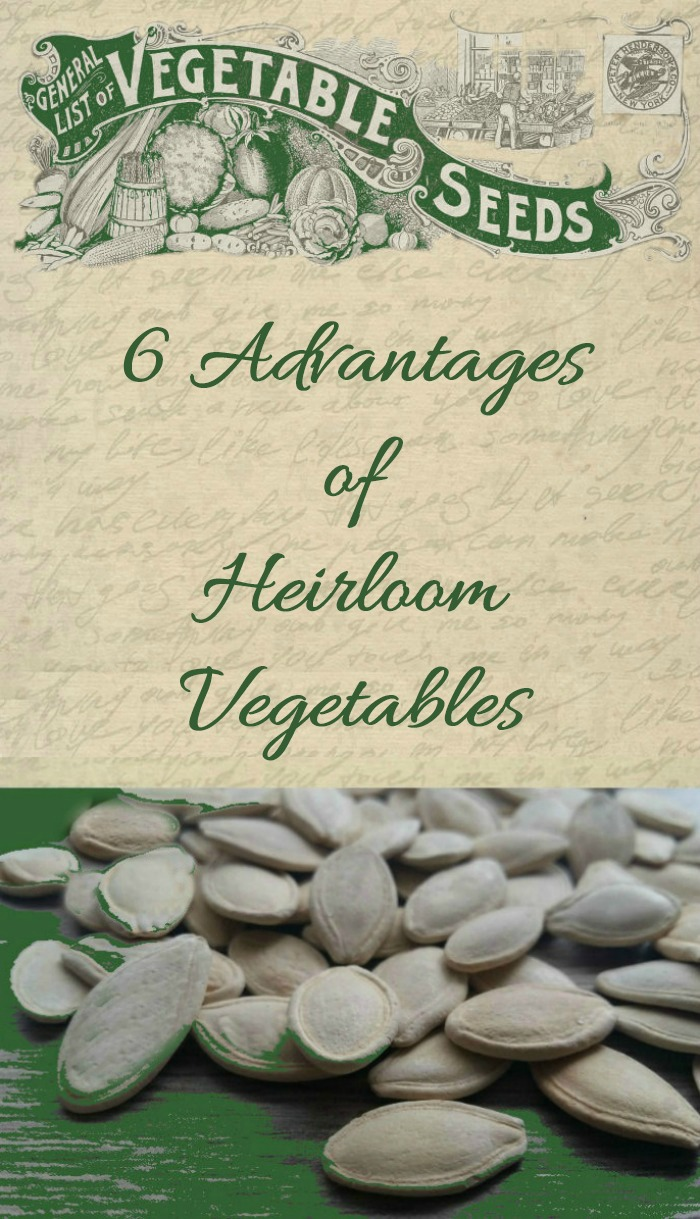 6 advantages of heirloom vegetables. Find out why we grow them