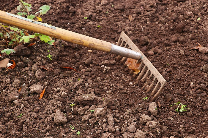 Be sure to till or rake your garden bed in early spring to get it ready for planting