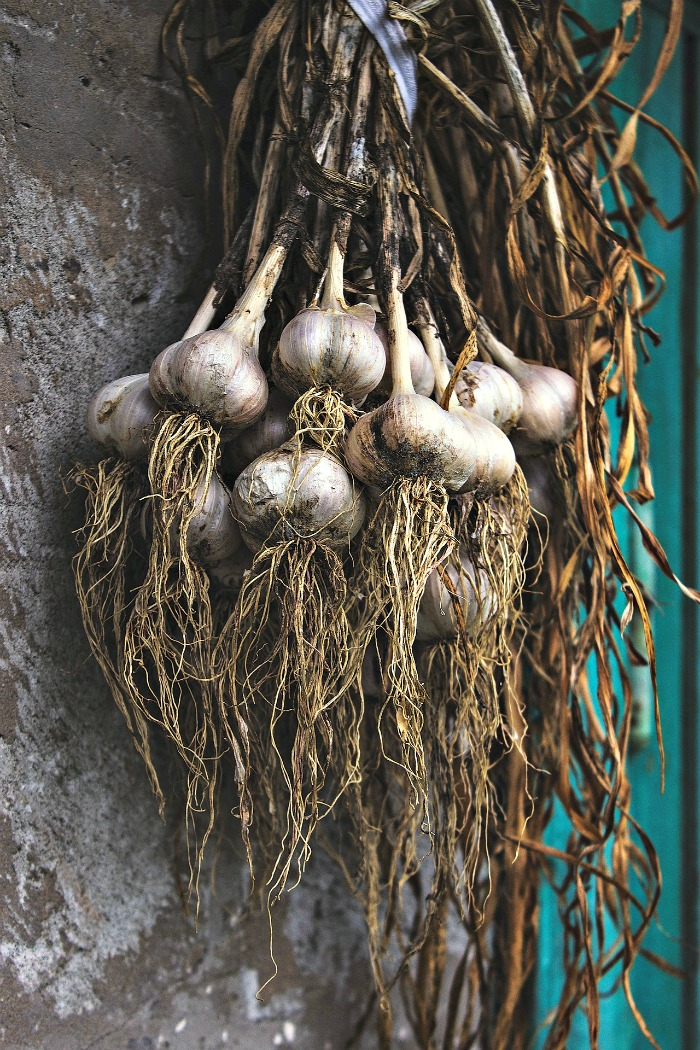 Dry garlic after harvest by hanging the stems and bulbs