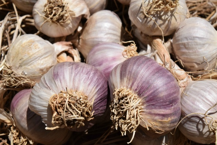 Garlic is so often used in cooking. Fall is the best time to plant it so that you have plenty next year.