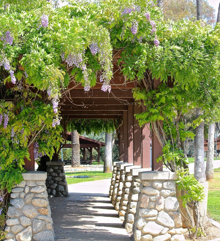 Stone and wooden arbor with wisteria vines