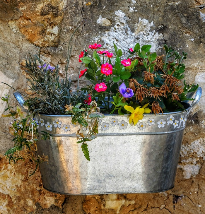 Galvanized bucket used as a planter