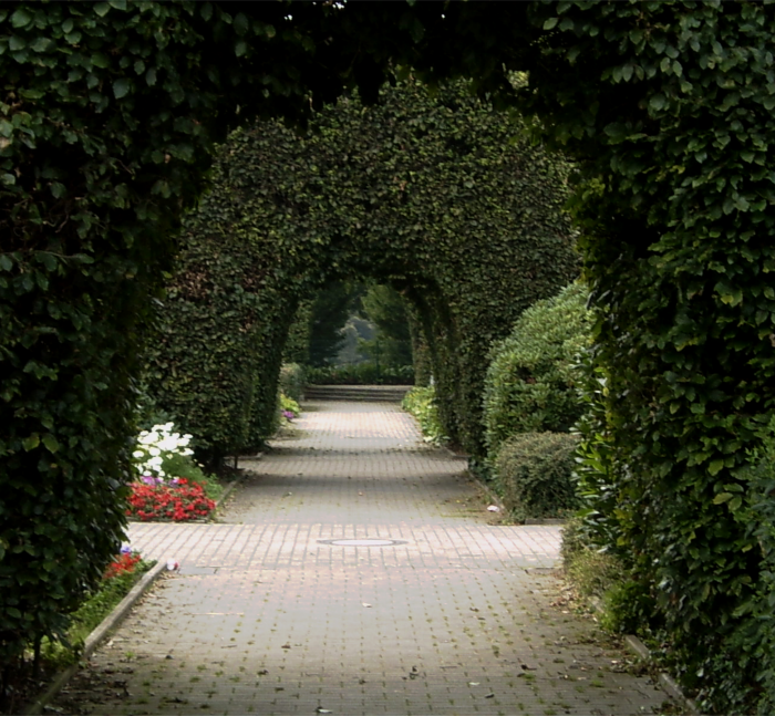 Trimmed ivy arches