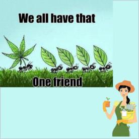 marijuana friend