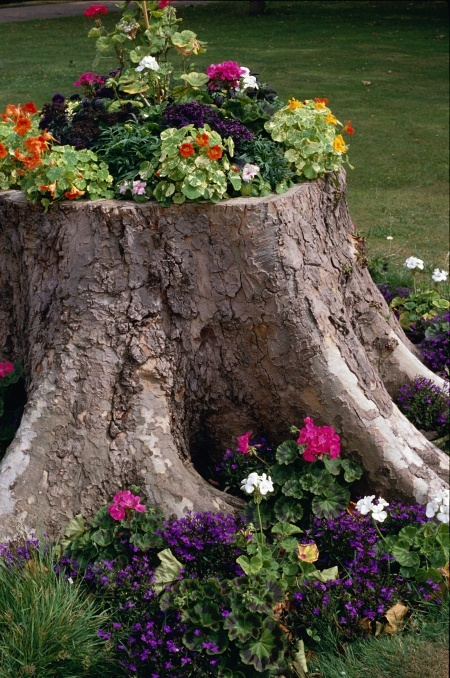 Creative gardening ideas: tree stump planted with annuals