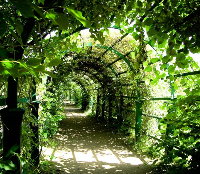 Tunnel arbor painted green covered in plants