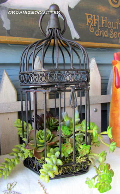 Vintage bird cage and Succulents - from Organized clutter
