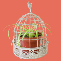 Bird cage planter with spider plant in a pot inside it.