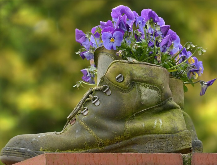 Boot planter with pansies