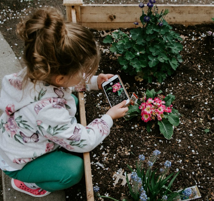 Little girl taking a photo of a plant in a raised garden bed