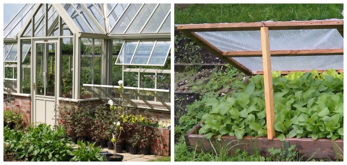 Greenhouse vs cold frame - two homemade greenhouse ideas