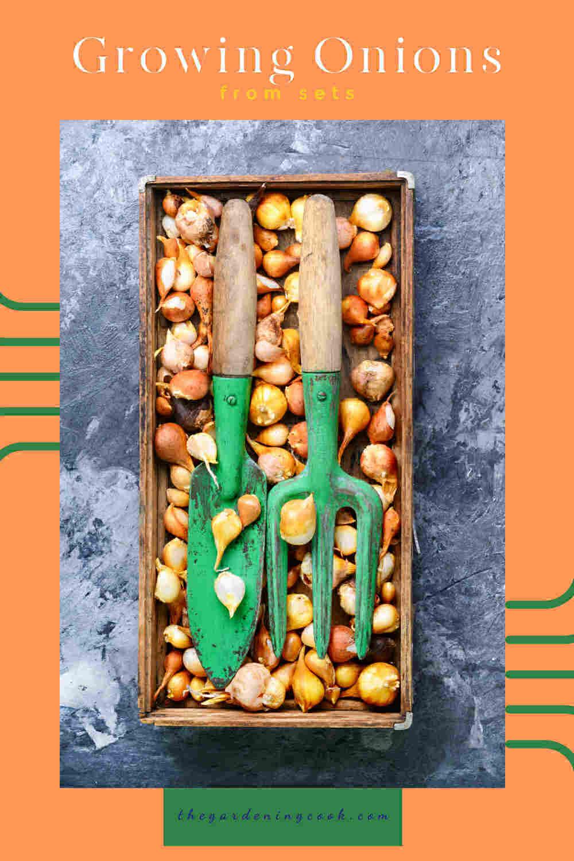 juegos de cebollas en una caja con herramientas de jardín y palabras