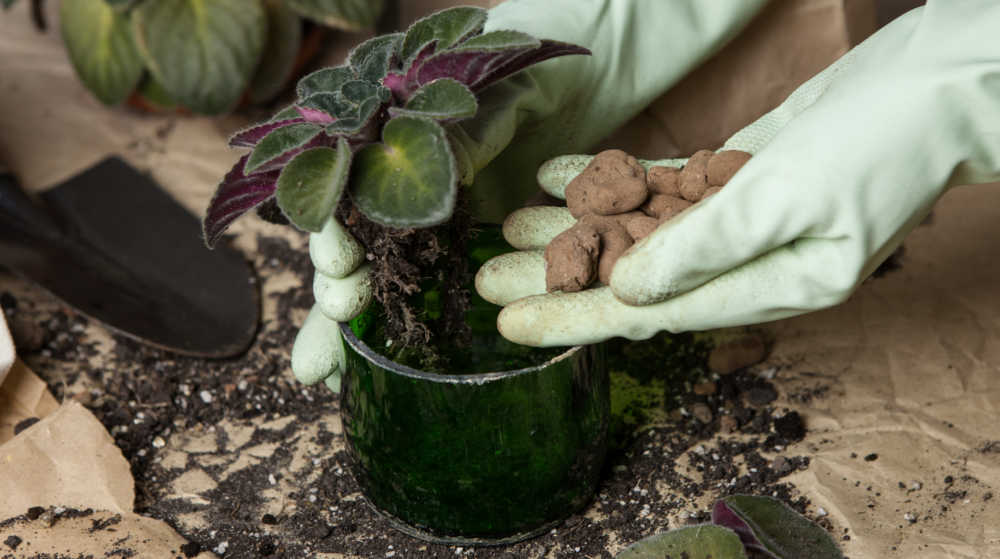Hands in gloves adding rocks to a planter with an African violet.