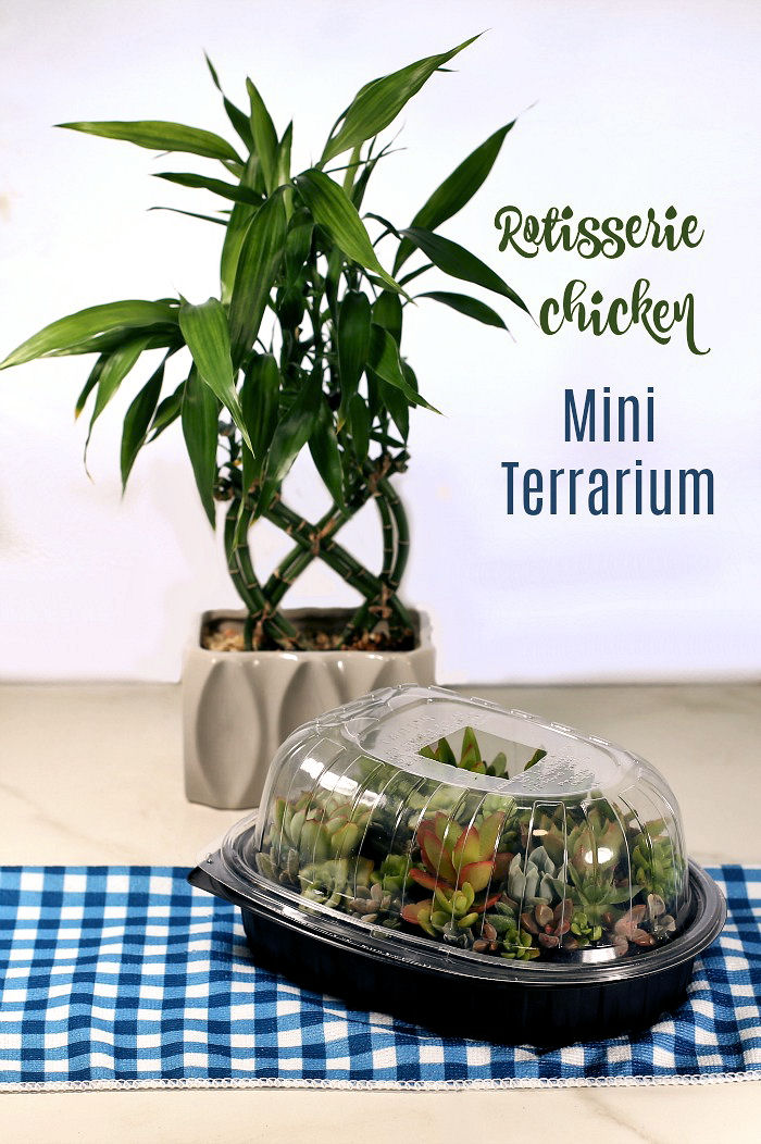 Rotisserie chiicken container used as a mini terrarium,