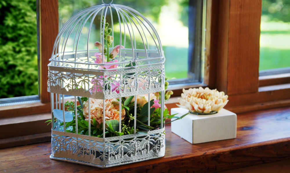 Bird cage on a windowsill with plants in it.