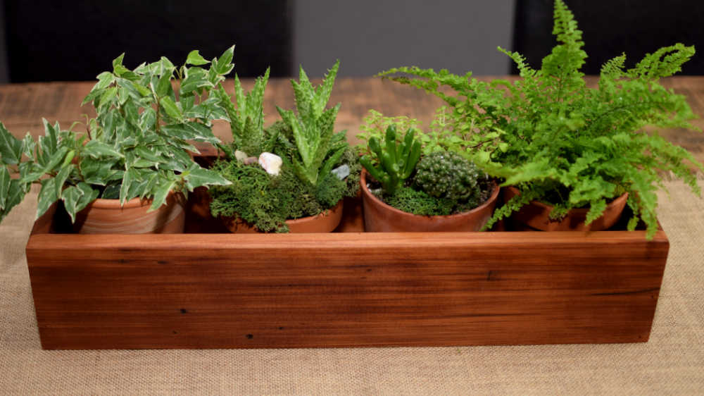 Wooden box planted with four plants in plastic pots.