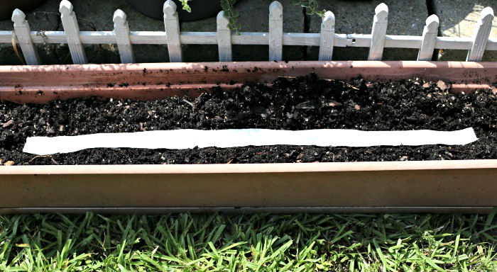 seed tape laid in a row in a planter