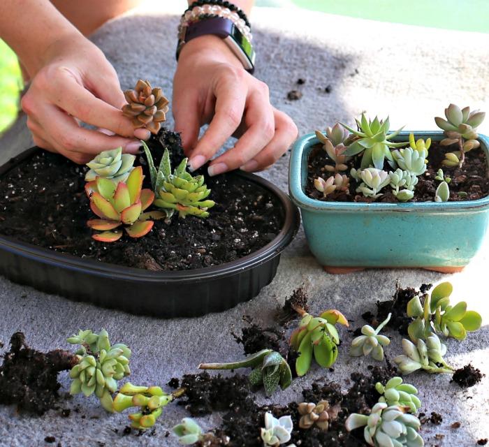 Planting a mini terrarium