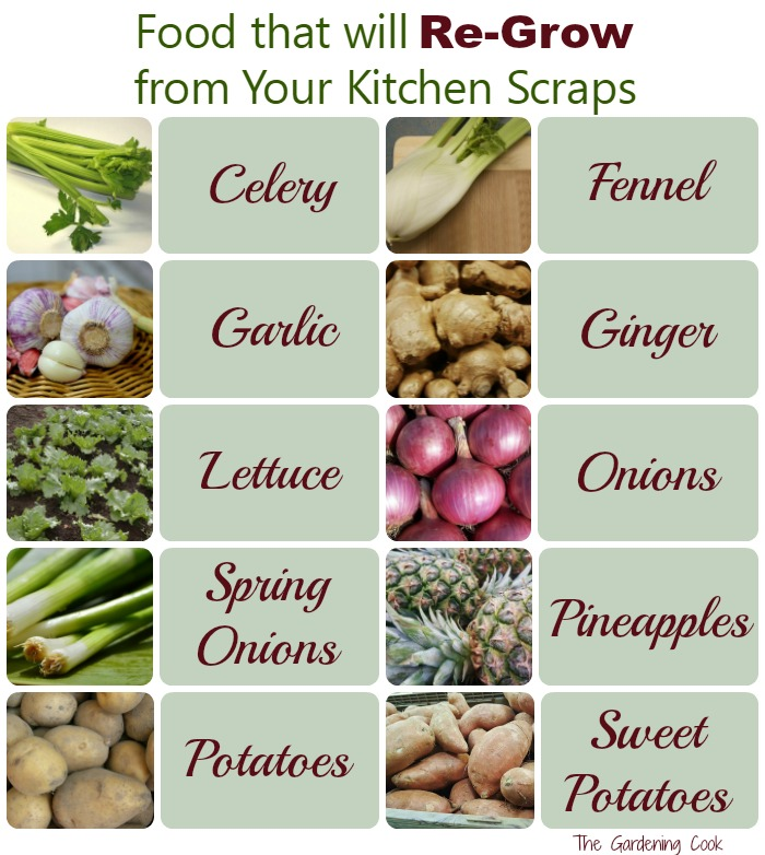 There are lots of foods that will regrow from Kitchen scraps. See how to turn your kitchen left overs into more food. thegardeningcook.com