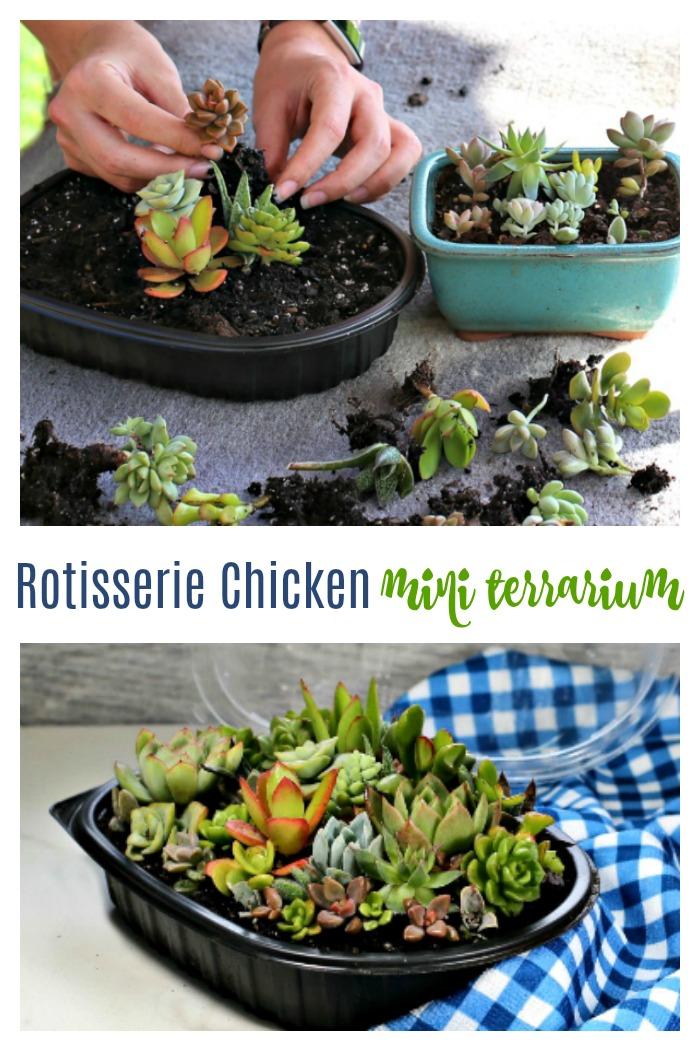 Rotisserie chicken miniature terrarium