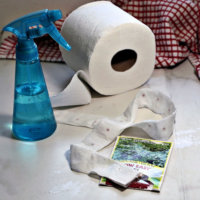 DIY seed tape toilet paper project