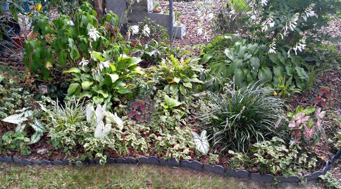Shade garden bed