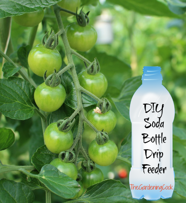 Soda Bottle Drip Feeder For Plants Water Plants With A Soda Bottle