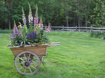 Wheel barrow planter with snap dragons and lupines.
