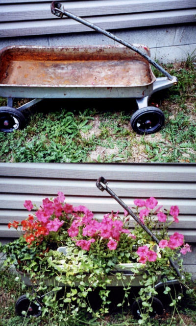 Wheel barrow planter gift from son turns into a lovely planter