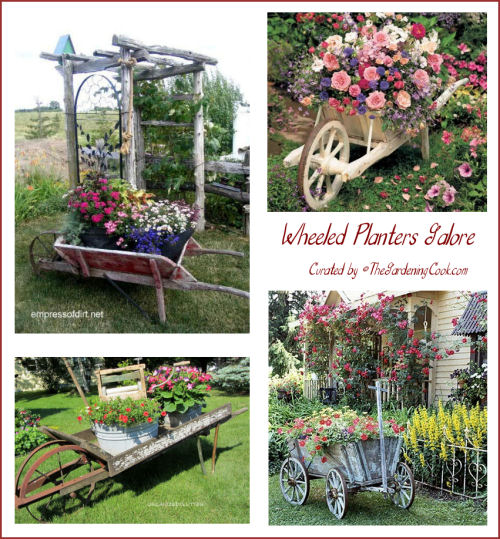 Collection of wheelbarrow planters. Recycling at its best!