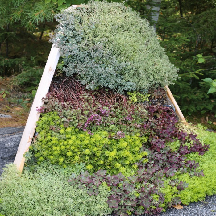 Living vertical planter