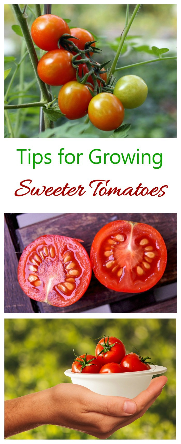 Sweet Tomatoes - Tips, Tricks & Myths - The Gardening Cook