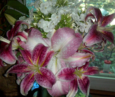 Oriental Lilies and David Phlox
