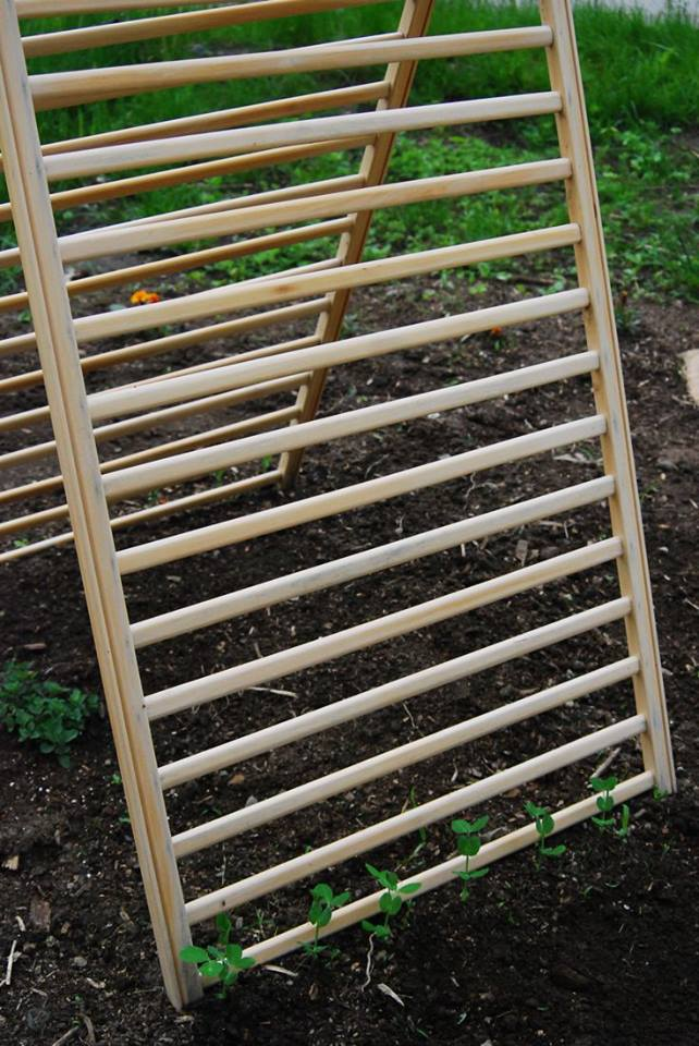 Crib cot frame makes a great vegetable trellis