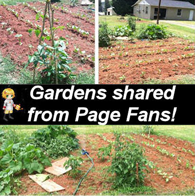 Vegetable gardens from the fans of The Gardening Cook