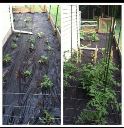 Veggie garden progress