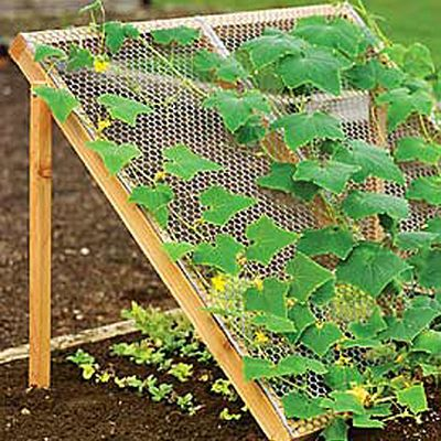 cucumber trellis from gardenerssupply.com