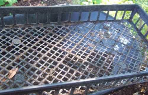 Plastic tray ready for adding compost to screen.