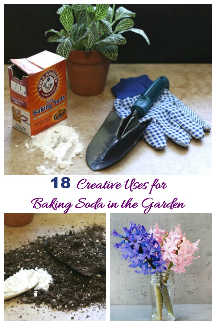 These creative uses for baking soda in the garden shows that it's not just good for baking and absorbing fridge odors!