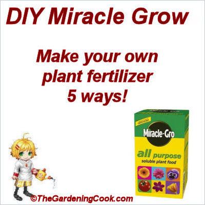DIY Miracle Grow Fertilizer
