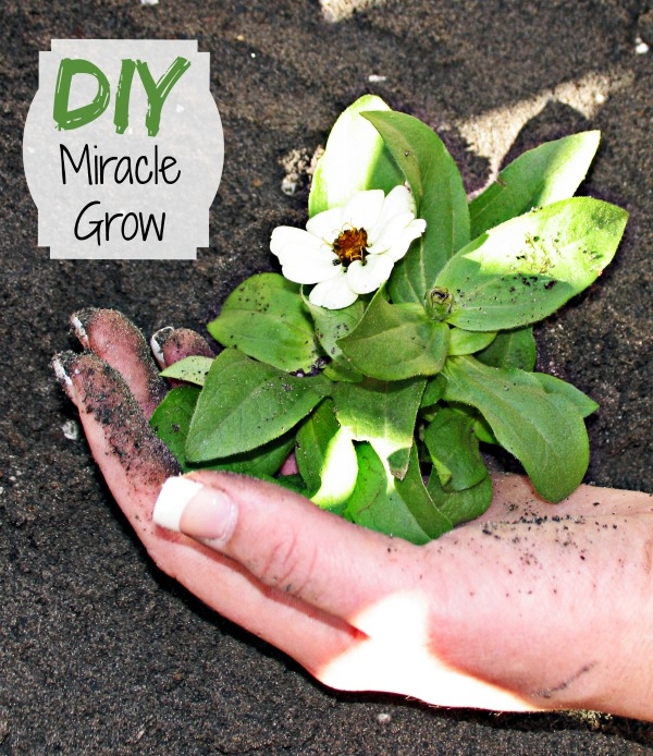 Making Home made plant food is easy with this DIY Miracle Grow recipe