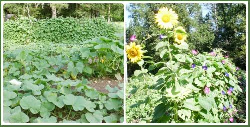 Fan garden from 2012