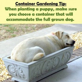 Be sure your container will house a full grown dog!
